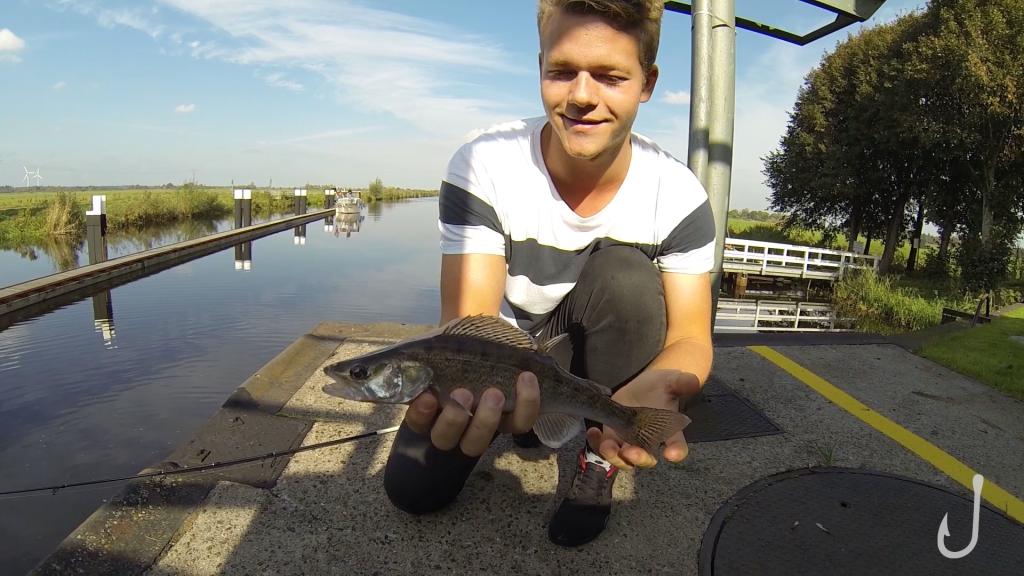 Beim angeln an Schleusen konnte Jojo die ersten Schleusen-Zander fangen.