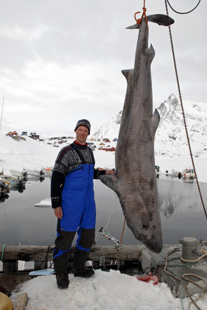 Was am Dorfteich begann, nahm ein dickes Ende: 251 Kilo wog der Eishai, den Kai Rohde in Grönland fing. Foto: K. Rohde