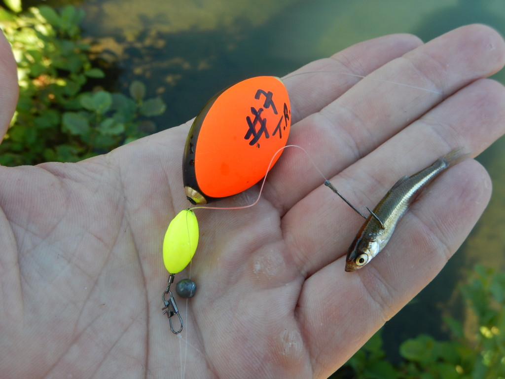 Posenmontage fürs Forellenangeln mit Köderfisch. Mit dem Float Egg kann man so seinen Köder optimal anbieten.