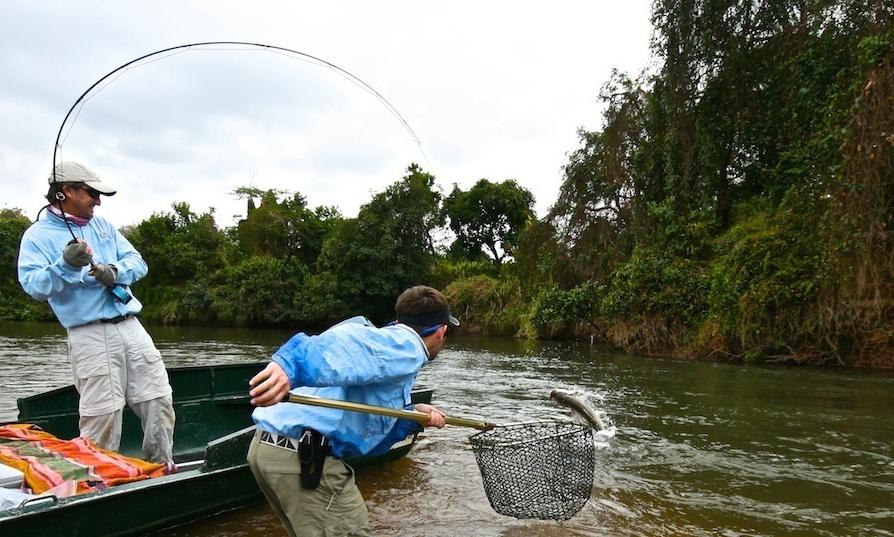 Beim Fliegenfischen auf den Tigerfish geht es richtig zur Sache! Diese Fische sind extrem explosiv und stark wie ein ... Tiger!