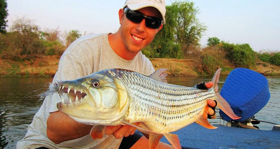 Tigerfish, gefangen mit dem Streamer. Das Fliegenfischen auf das Flussmonster in Afrika ist sehr effektiv.