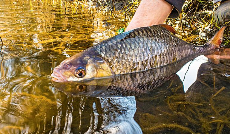 Das Saarland plant ein Gesetz zu verabschieden, welches sich strickt gegen Catch und Release widmet.