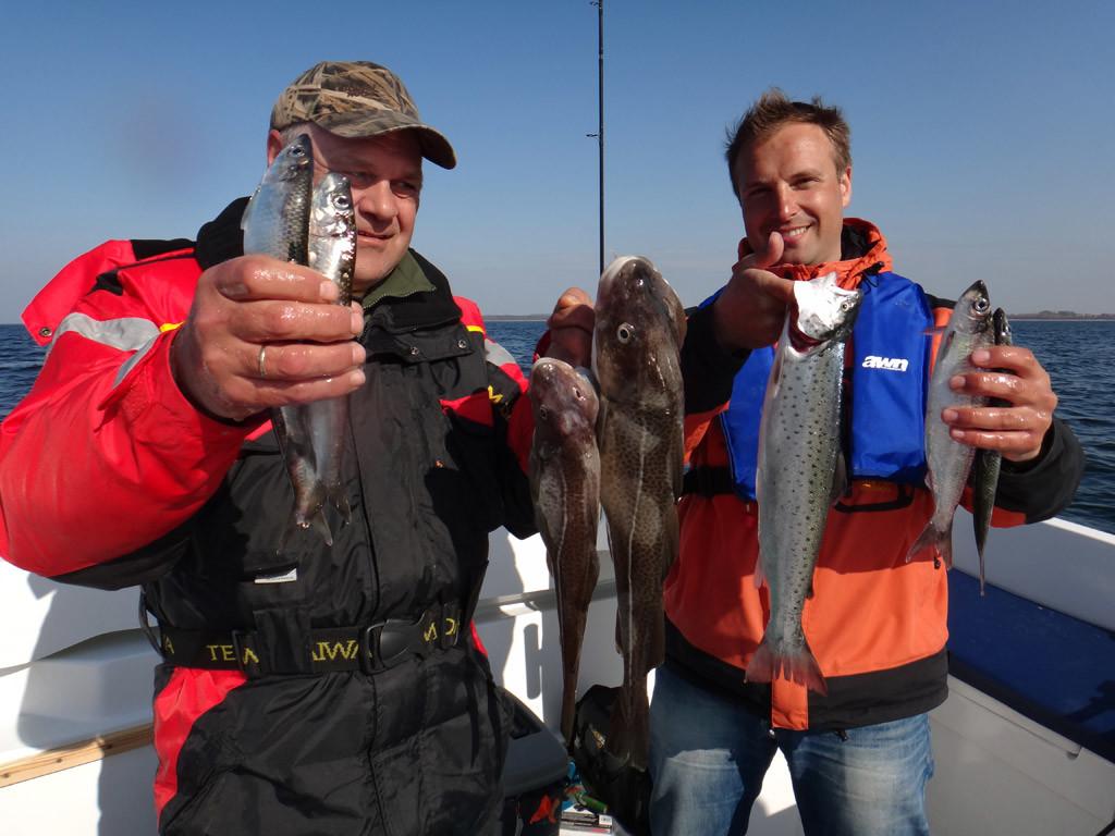 Dorsch, Hering und Meerforelle: So kann ein Tag beim Meeresangeln vom Boot aussehen.