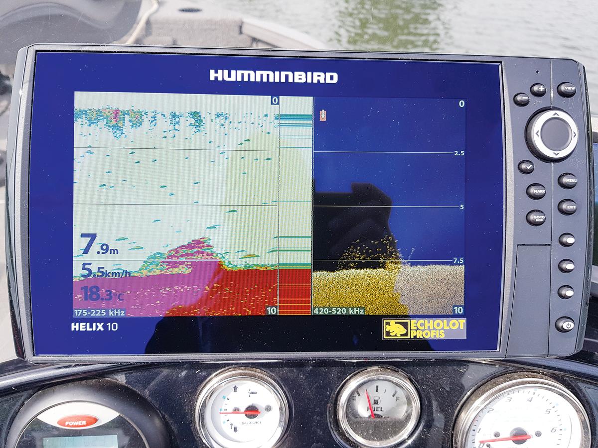 Was im Sonar wie ein Klumpen wirkt, entpuppt sich dank CHIRP-Technik als Fisch-Schwarm. Foto: BLINKER/S. Gockel