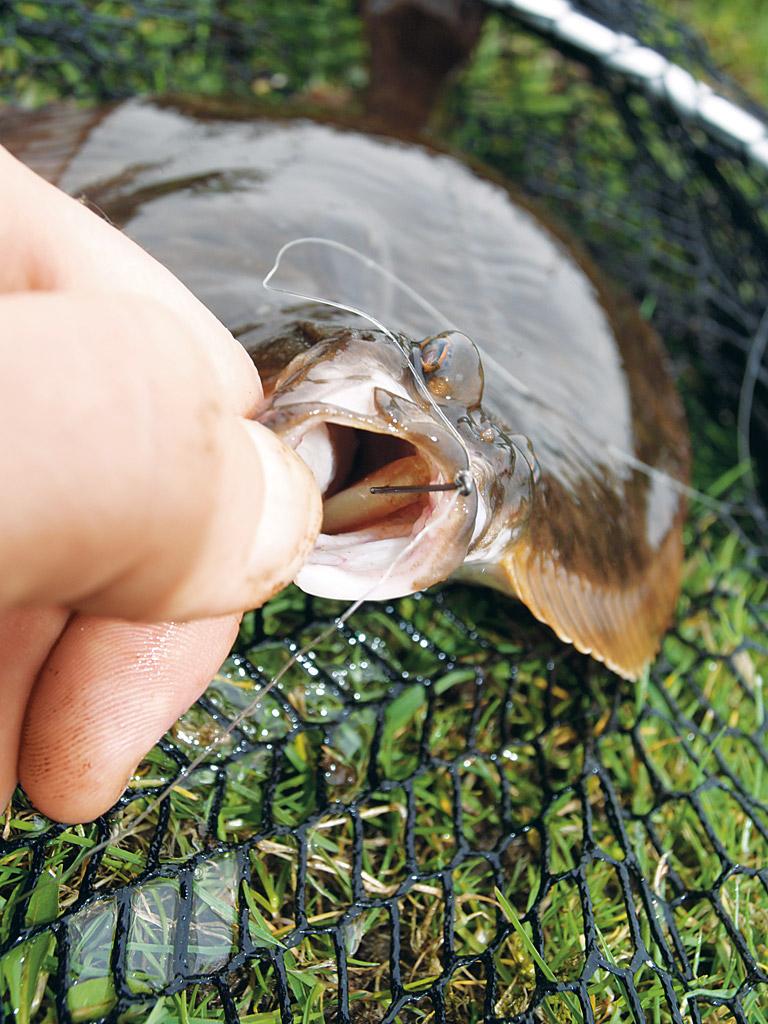 Kleine Köder können besser von den Plattfisch aufgenommen werden. Die Fehlbissquote sinkt dadurch. Foto: A. Pawalitzki