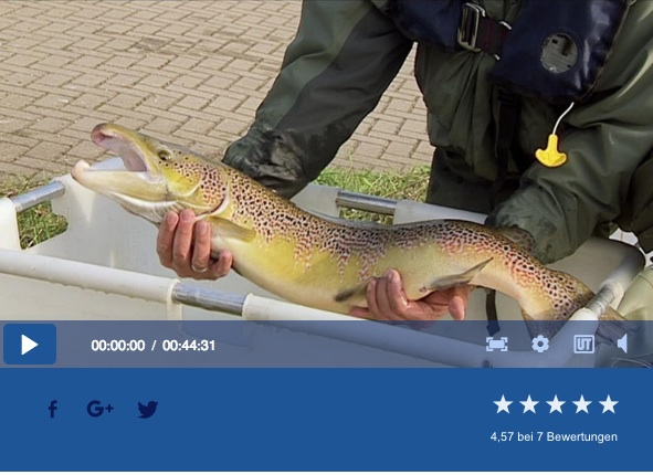 Rueckkehr der Lachse in Deutschland: In dem spannenden Beitrag im NDR wird geziegt, wie die Lachse sich ihren Weg zurück nach Deutschland bahnen,