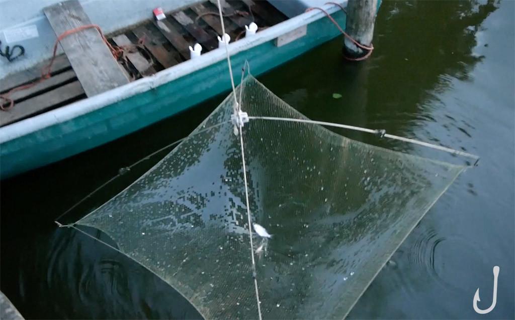 Die spärliche Ausbeute beim Köderfischsenken.