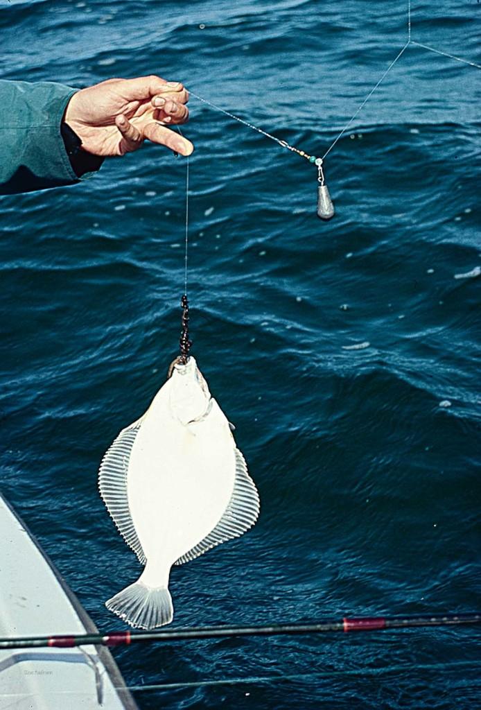 Wer seinen Köder in Bewegung hält, vergrößert seine Fangchancen auf Plattfische. Foto: Blinker