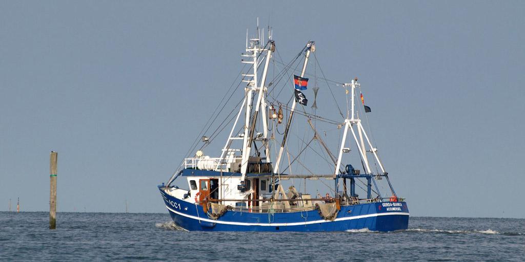 Dorsch-Fangquote Ausnahmeregelung: Wenn es nach der SPD-Europaabgeordneten Ulrike Rodust geht, dürfen bald Fischkutter in der Dorsch-Laichzeit im flachen Wasser ihre Netze auslegen. Foto: pb