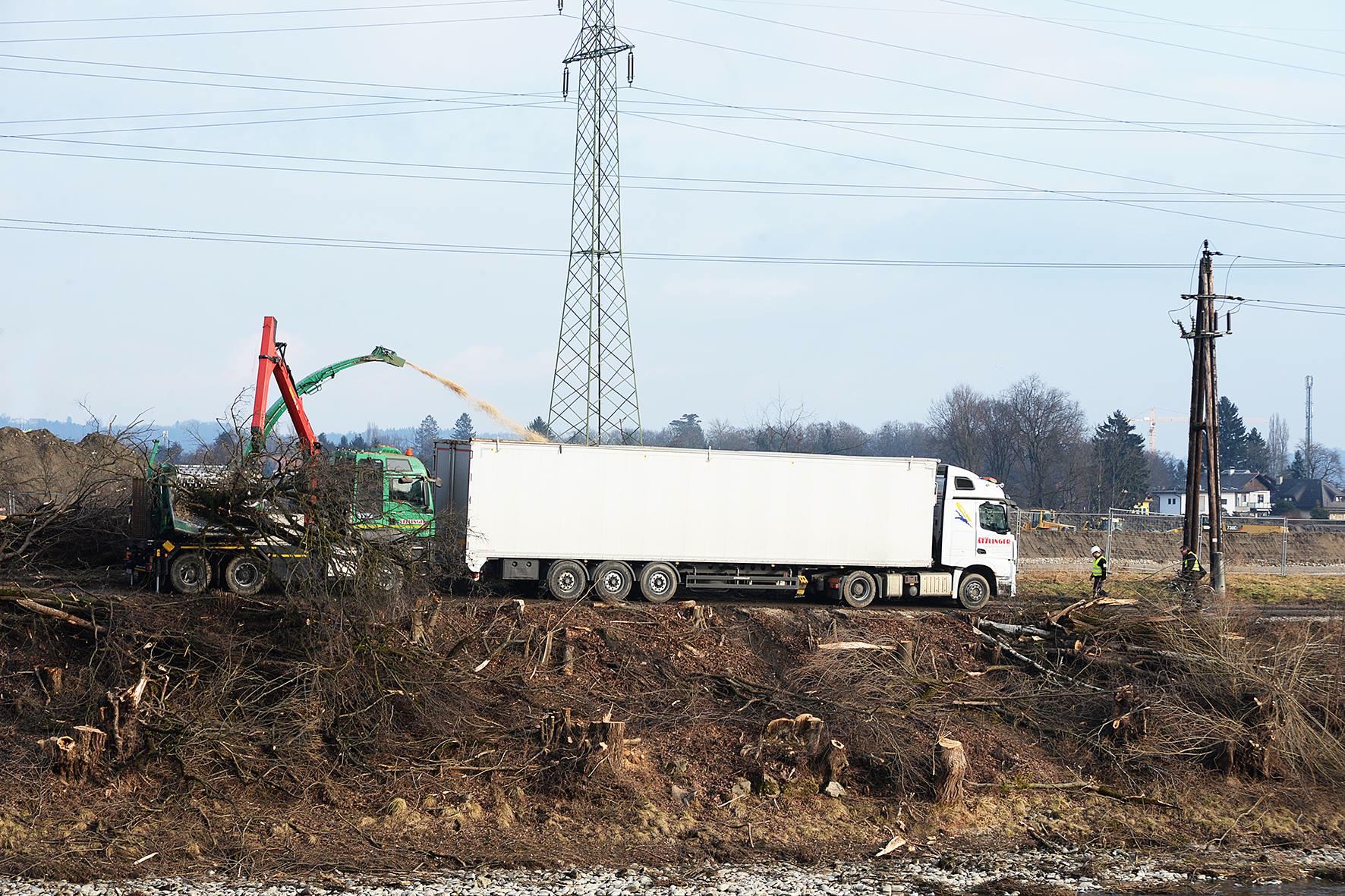 Petition gegen Wasserkraftwerk: Baum Rodung Petition gegen Wasserkraft Mur Graz