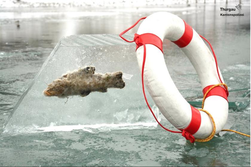 Tiefkühlfisch: Bei ihren Taucheinsatz stieß die Kantonspolizei Thurgau auf diese eingefrorene Schleie. Foto: Facebook/ Kantonspolizei Thurgau