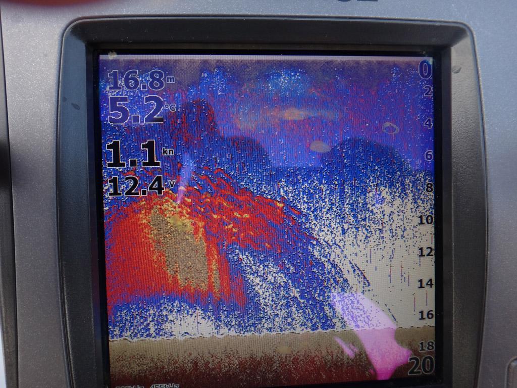 Hier auf den Echolot zu sehen, ein großer Schwarm Heringe direkt unter dem Boot. Foto: BLINKER/Ratke