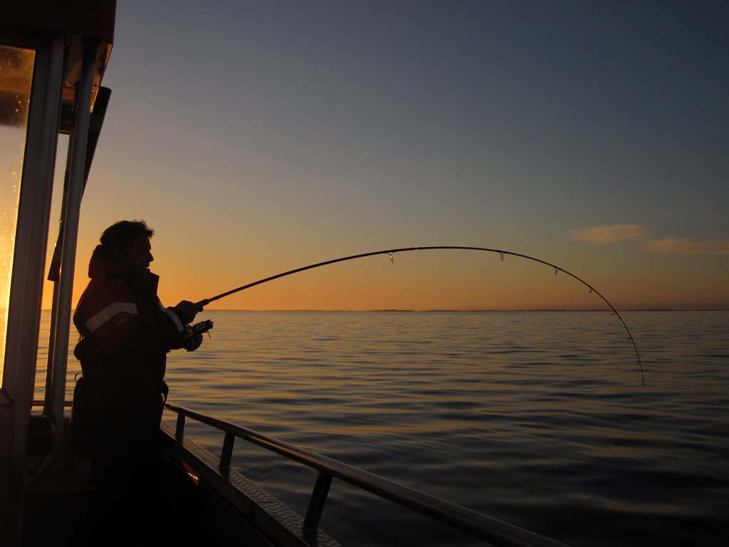 Wer den richtigen Fangplatz gefunden hat, kann die ganze Nacht auf Pollack angeln. Foto: S. Rose