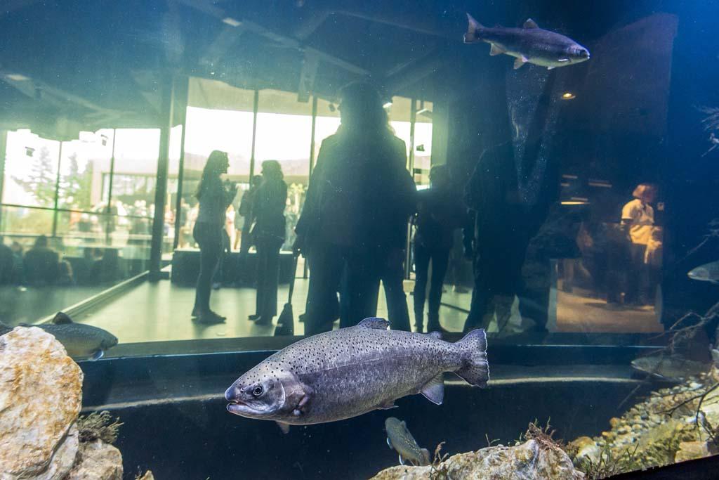 Das Süßwasser-Aquarium Aquatika ist das erste seiner Art in Kroatien. Foto: Aquatika