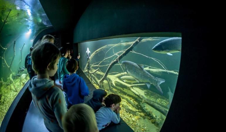 Das Aquatika ist nicht nur für kleine Besucher ein echtes Highlight. Auch die Großen kommen hier voll auf ihre kosten. Foto: Aquatika