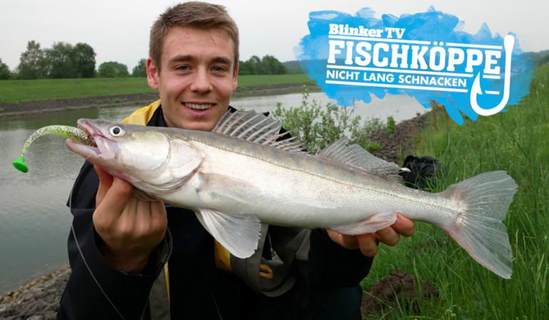 Zander im Kanal gibt es reichlich. Man muss sie nur finden. Dann wird man mit solchen tollen Fisch belohnt. Dieser Fisch war übrigens der erste Zander von Fischkopp Fritjof. Foto: Fischköppe
