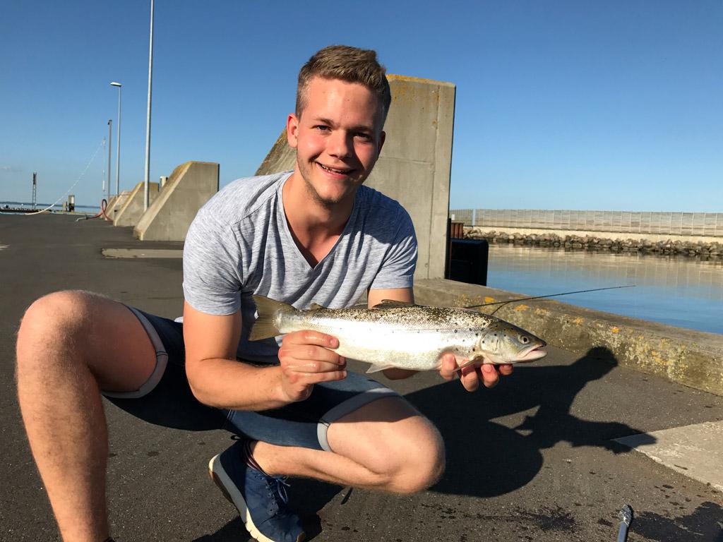 Am Tag ging Jojo diese stattliche Meerforelle im dänischen Hafen an den Haken. Foto: BLINKER/Fischköppe