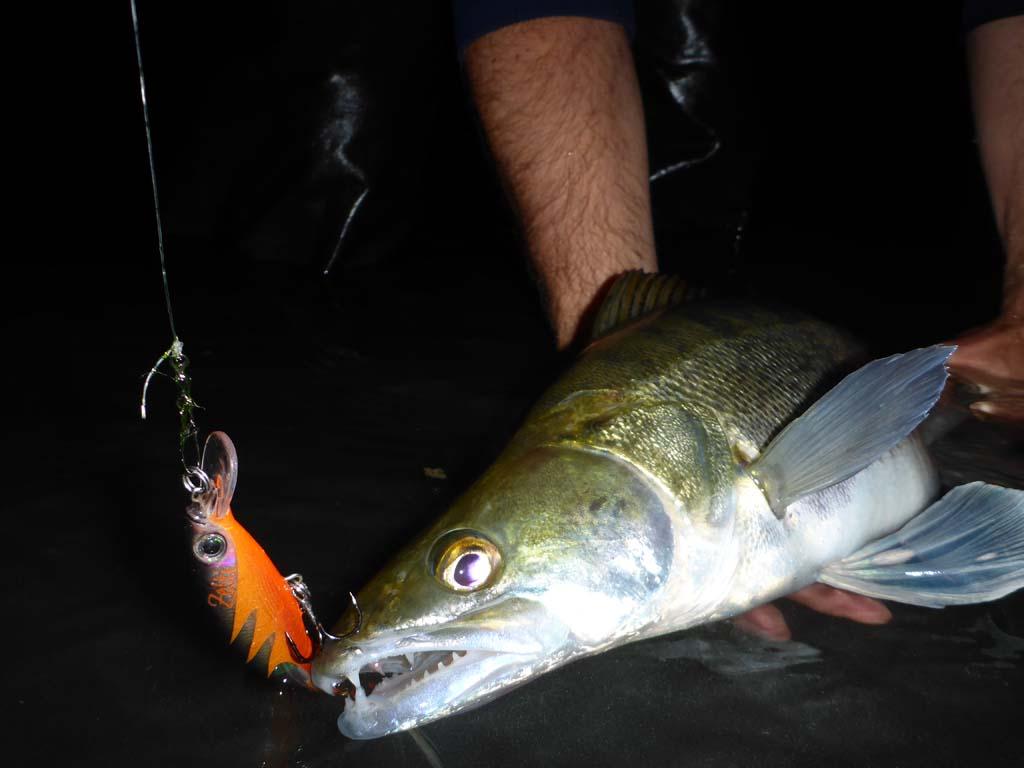 Wobbler wie der Zetti sind wahre Fangmaschinen in der Nacht. Foto: S. Kaufmann