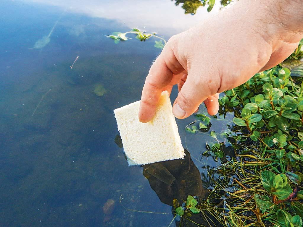Eine der beiden Scheiben wird kurz gewässert. Foto: ANGELSEEaktuell/G. Bradler