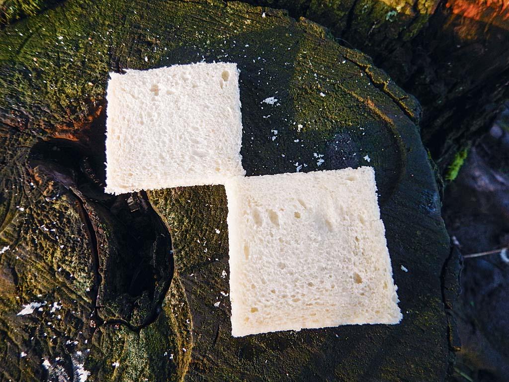 Feuchter und trockener Toast sind jetzt im Verhältnis 1:1. Foto: ANGELSEEaktuell/G. Bradler
