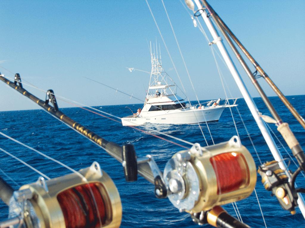 Das Ziel beim Big Game Angeln in Kroatien ist der begehrte Blauflossen-Thunfisch. Foto: BLINKER