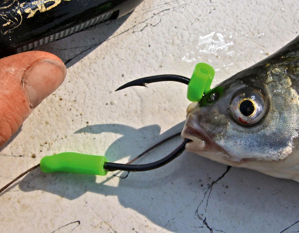 Der Köderfisch an der U-Pose wird auf dem Führhaken mit einem Stück Silikonschlauch gesichert. Foto: BLINKER/ B. Gründer