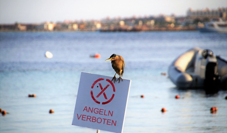 Das Angelverbot in Schutzgebieten der Ost- und Nordsee ist für alle Angler ein Schlag ins Gesicht. Foto: BLINKER/PB