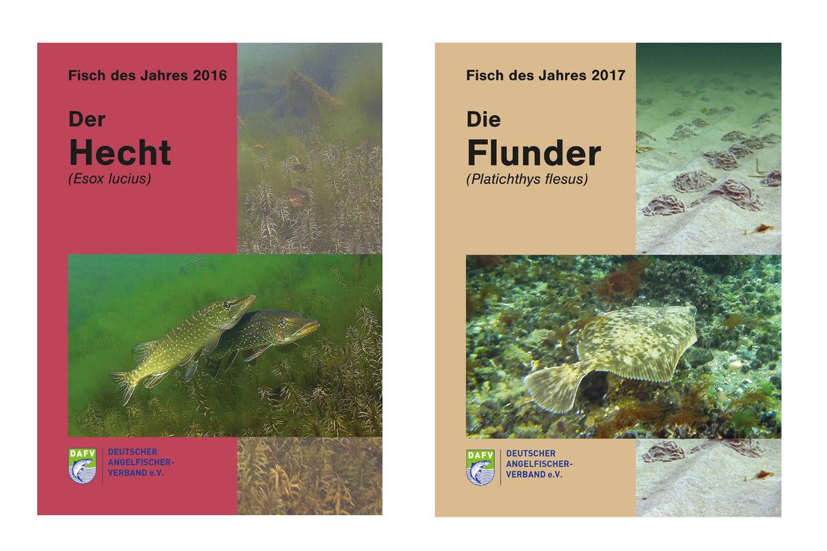 Ab sofort sind die Broschüren zum Fisch des Jahres im DAFV-Shop käuflich zu erwerben.