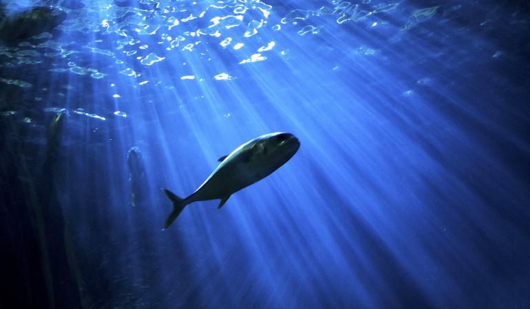 Jährlich wird der Fisch des Jahres durch den Deutsche Angelfischerverband (DAFV) gewählt. Foto: pb