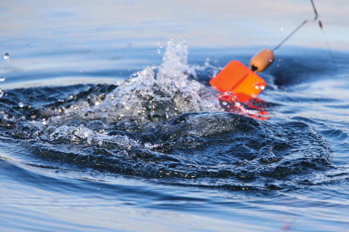 Mit der Segelpose kann man große Gewässerabschnitte nach hungrigen Räubern absuchen. Foto: BLINKER/S. Rowley