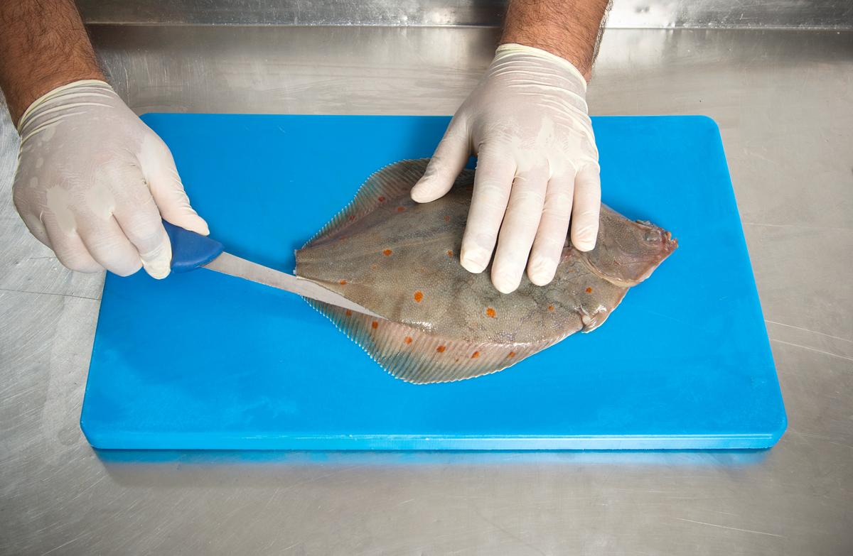 Man verkantet das Messer auf der Mittelgräte und trennt das Filet bis zum Flossenansatz heraus. Foto: BLINKER/W. Krause