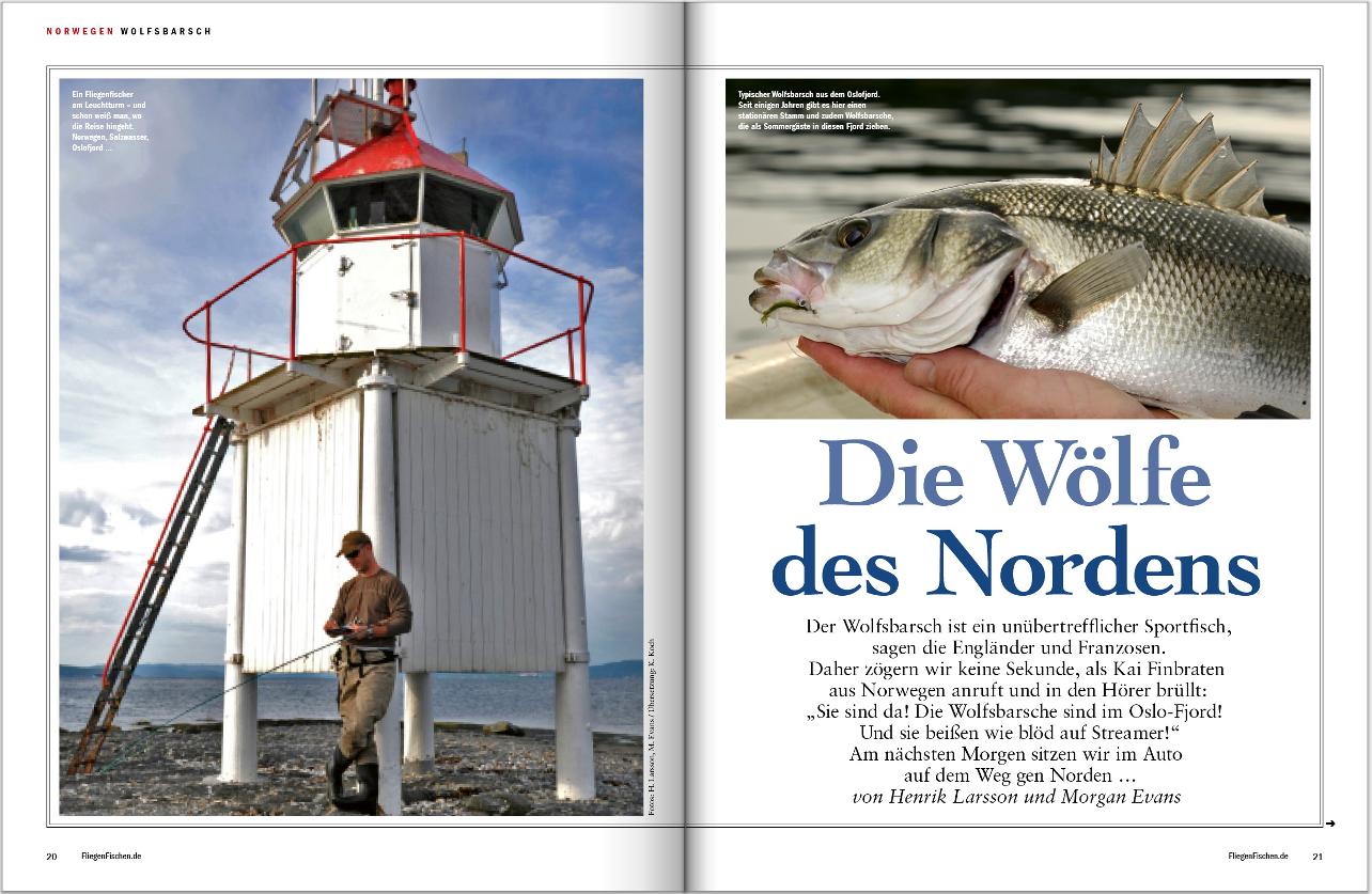 Wolfsbarsche in Norwegen! Wir zeigen Ihnen in unserer Reiseausgabe von FliegenFischen, wie und wo Sie diese Fische fangen.