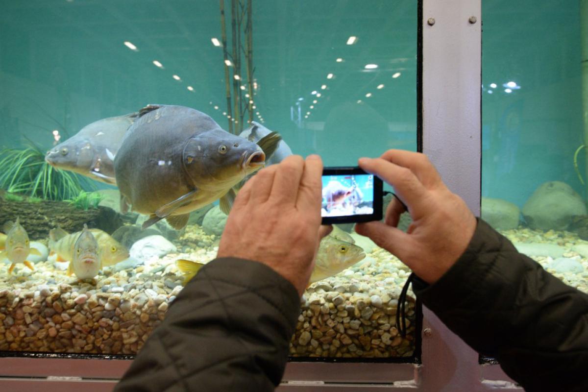 Mit dem Bait-Truck von AQUADEMO – Europas größtem mobilen Aquarium - erwartet die Besucher dieses Jahr ein besonderes Highlight. Foto: AngelWelt Berlin
