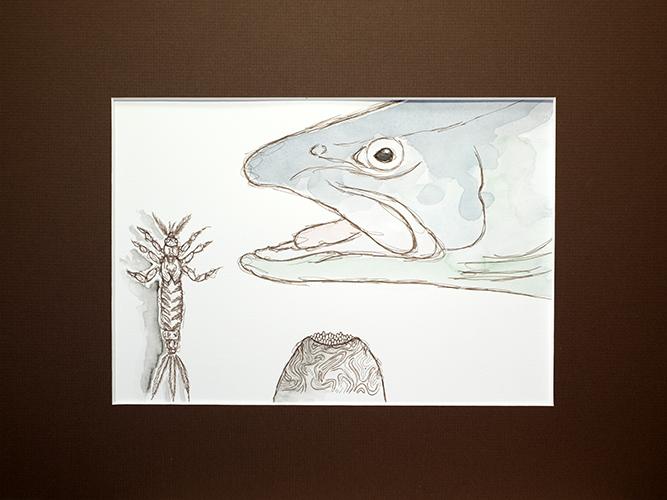 """Für die gebundene Ausgabe des Buches wird es unter anderem eine Sonderauflage des The Wild Trout Trust-Aufklebers geben oder die original Skizze einer """"Brown Wing Killer"""" mit Passepartout, gerahmte Lachsfliege (Brown Wing Killer) und ein Postkartenset."""