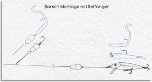 iCapio Barsch-Montage mit Beifänger. Grafik: iCapio