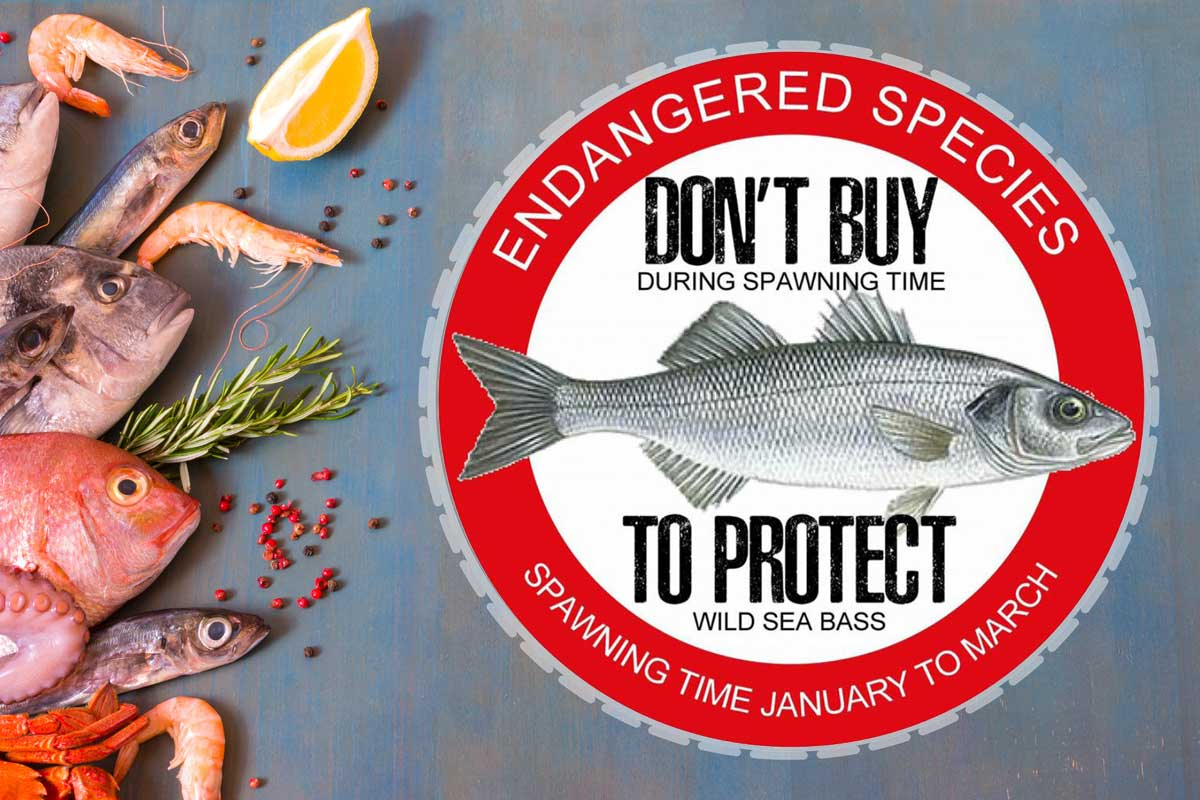 Wolfsbarsch-Fangverbot - Dieser Sticker soll Restaurant-Betreiber darauf aufmerksam machen, keine Wolfsbarsche während der Laichzeit zu kaufen. Foto: Fotolia