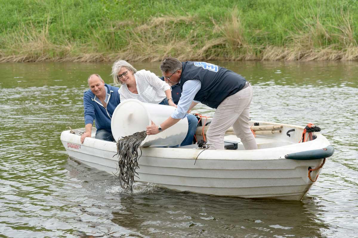 Der Aal steht auf der Liste der bedrohten Tierarten. Die Initiative zur Förderung des Europäischen Aals e.V. (IFEA) und der Eel Stewardship Fund (ESF) haben dafür ein Aal-Konzept-Wettbewerb für Angelvereine ausgeschrieben. Foto: ESF/Antje Schimank