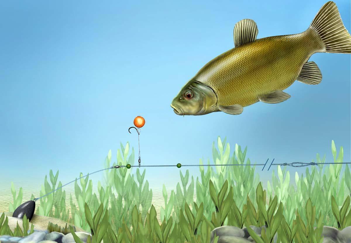 Beim angeln in und über Krautfeldern ist ein Chod-Rig mit einem Pop-Up-Boilie unschlagbar. Grafik: BLINKER/M. Ziegler