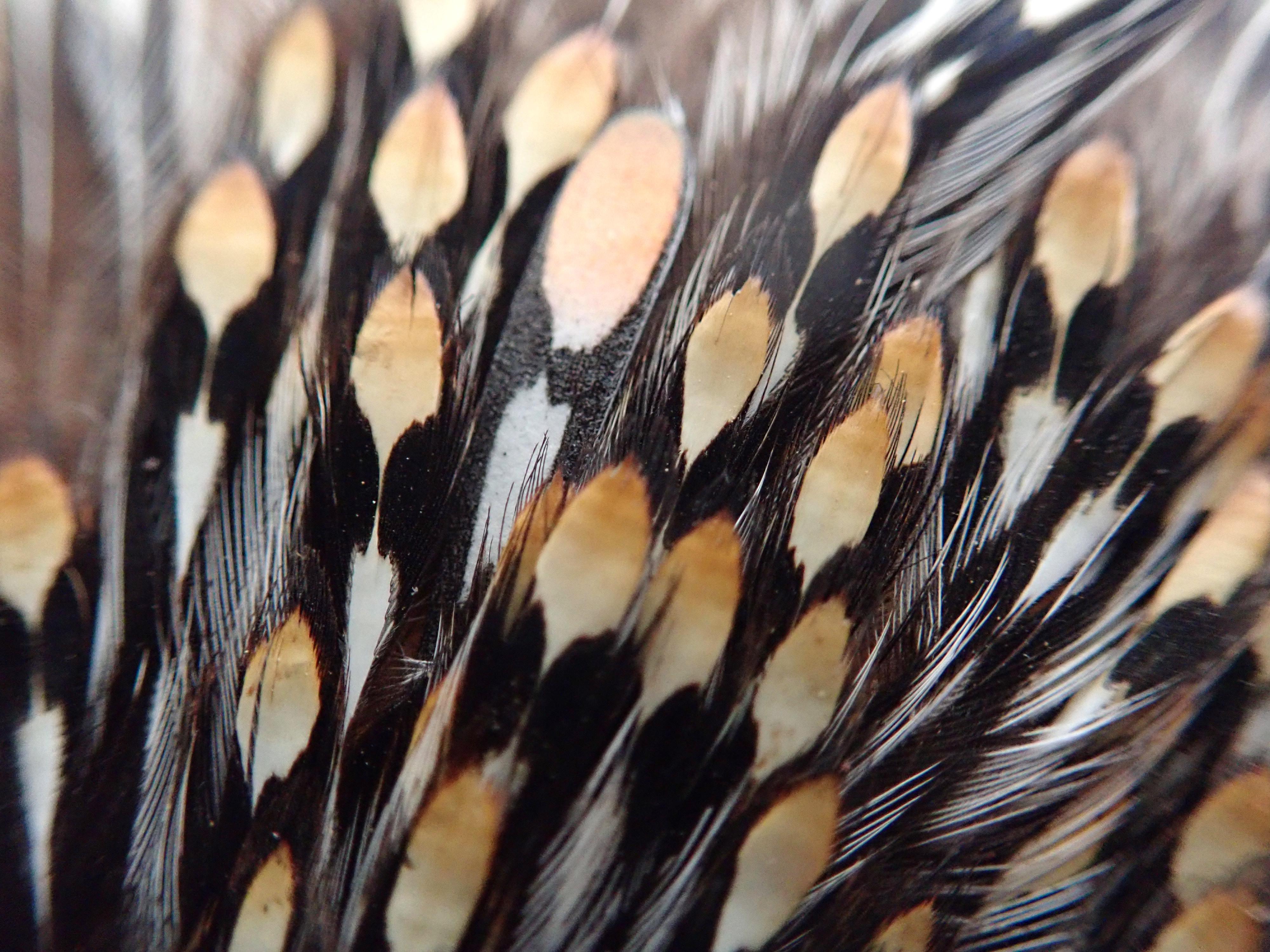 """Finde die Feder. In diesem echten Dschungelhahnbalg steckt eine unechte """"Pro Jungle Cock Gen3""""-Feder, und man muss schon sehr genau hinschauen, um den Unterschied zu erkennen. Na, Feder gefunden? Foto: M. Werner"""