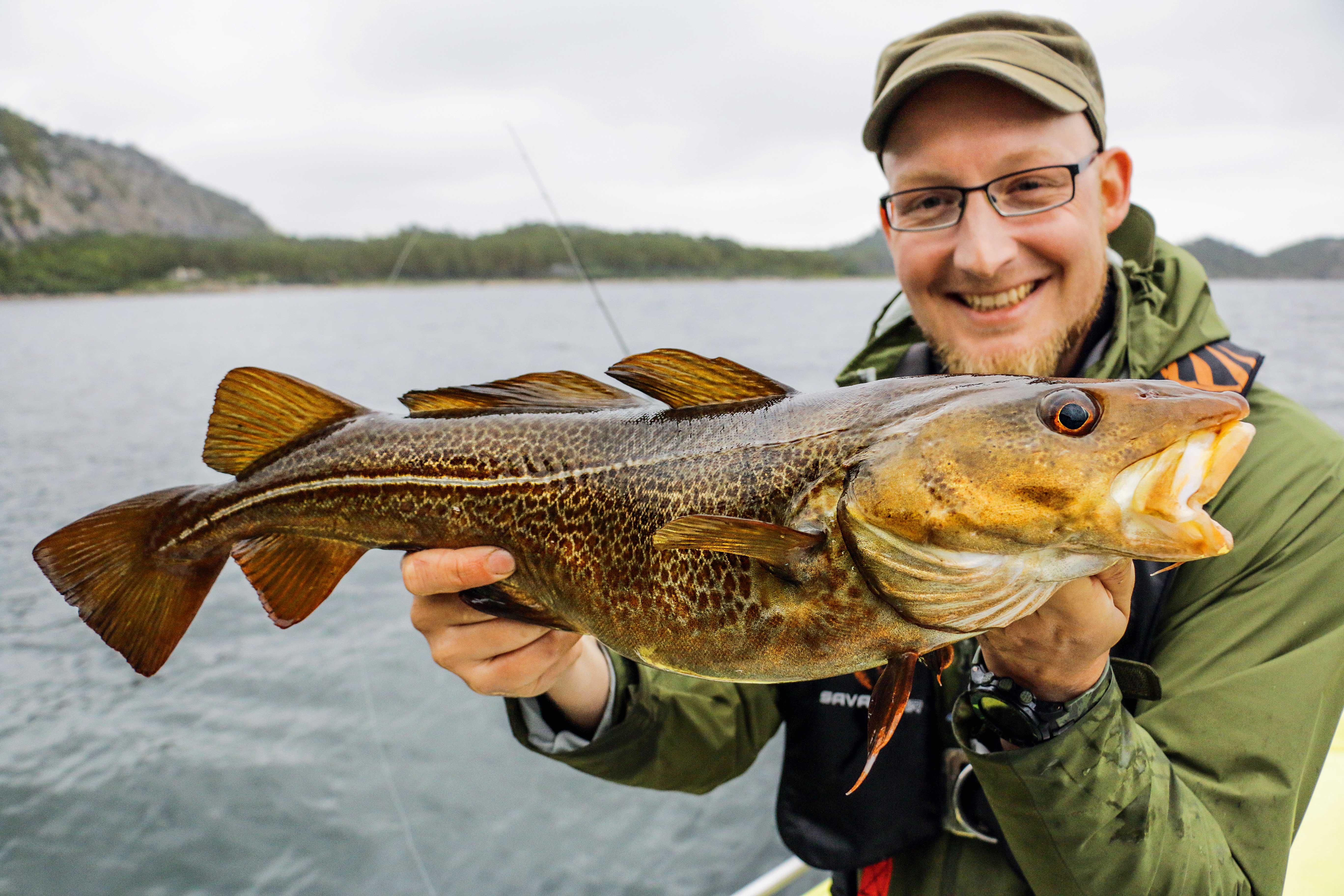 Der Dorsch ist einer der Haupt-Zielfische beim Meeresangeln in Norwegen.