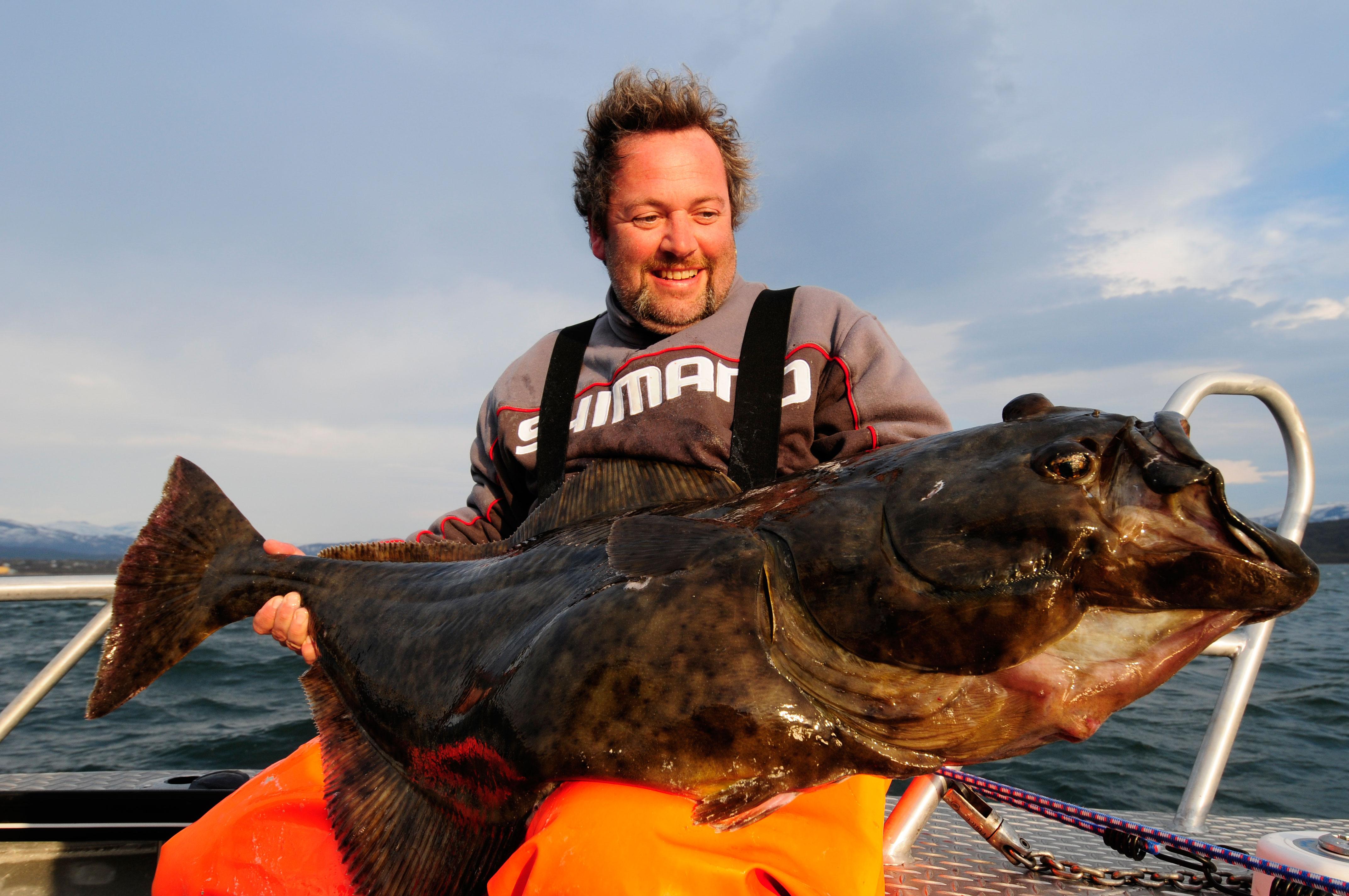 Der Heilbutt ist einer der Haupt-Zielfische beim Meeresangeln in Norwegen.