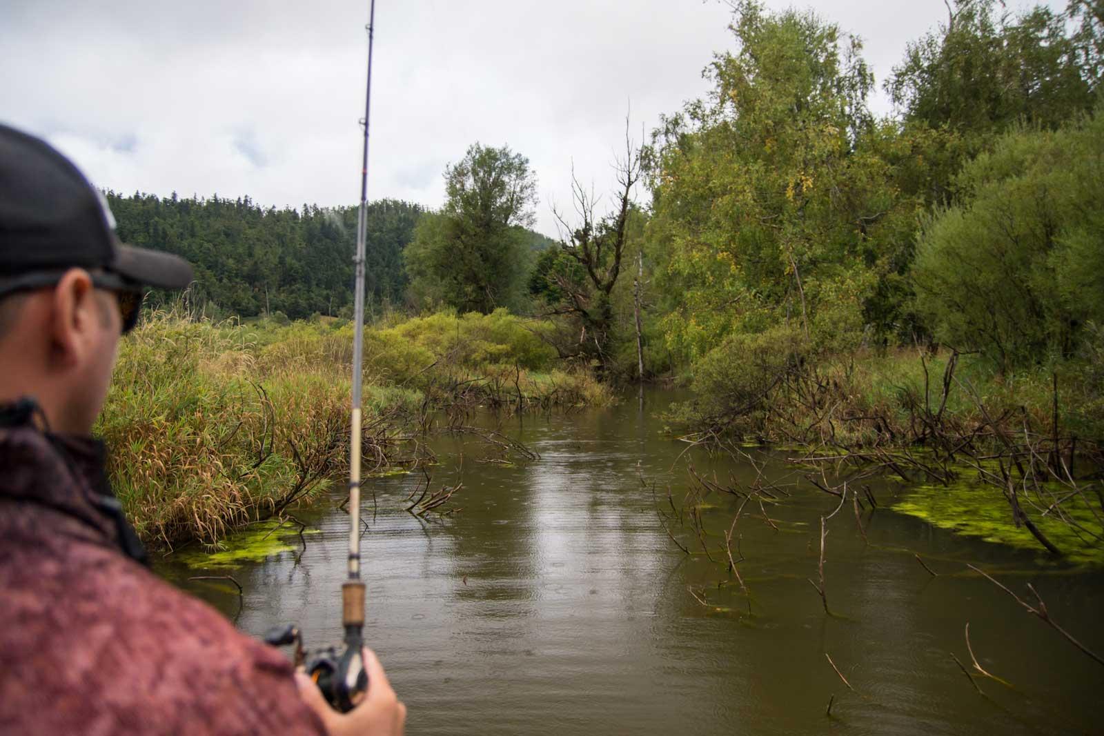 Hier riecht es nach Fisch! Das Hechtangeln mit dem Texas-Rig ist an solchen Gewässern die perfekte Methode, um hängerfrei fischen zu können. Foto: D.Vignjevic