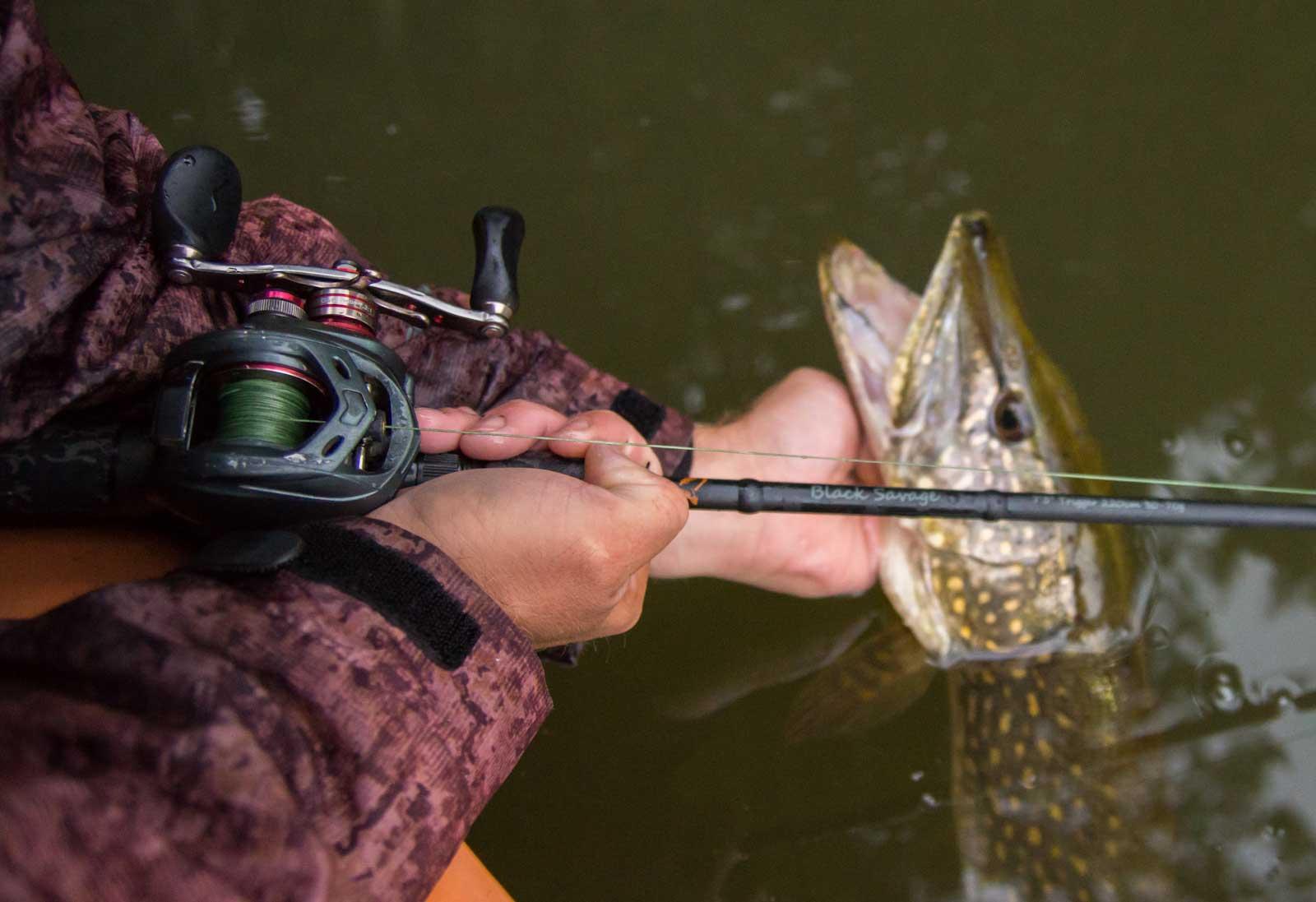 Eine Baitcaster erleichtert das zielgenaue Auswerfen beim Hechtangeln mit dem Texas-Rig. Foto: D.Vignjevic