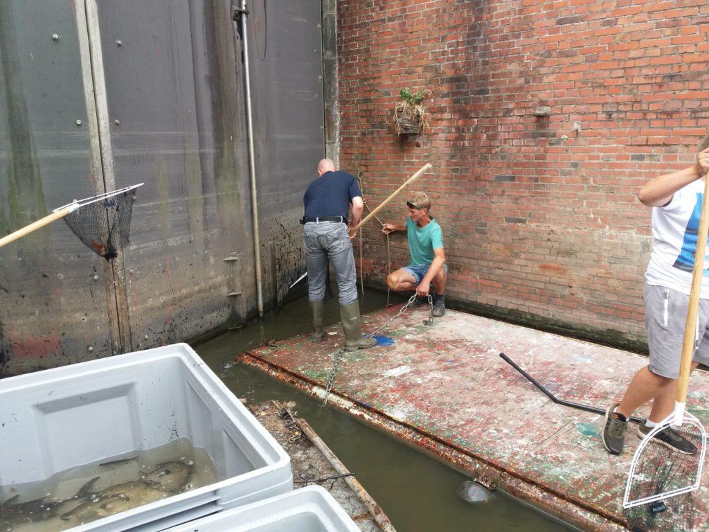 Fischretter in Greetsiel. Die geretteten Fische werden in andere BVO-Gewässer umgesetzt. Foto: Stefan Barteils/BVO