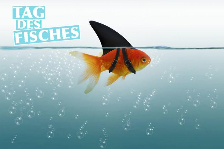 """Am 22. August jährlich der Tag des Fisches statt. Der Aktionstag steht ganz im Zeichen von bedrohten Fischarten und deren Artenschutz.2 Bereits seit 2007 wird dieser Tag jährlich gefeiert, auch wenn seine Herkunft bis heute nicht eindeutig geklärt ist.3 Ausgerechnet der Film """"Findet Nemo"""" liefert die plausibelste Antwort auf diese Frage!"""
