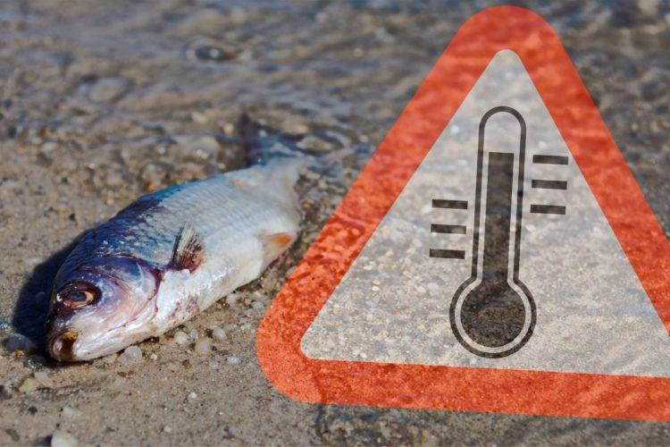 Großes Fischsterben im Stausee Rötlen. Mehr als 20 Tonnen toter Fische wurden bereits geborgen. (Beispielfoto) Foto: Fotolia