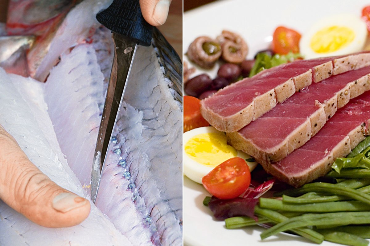 Foto rechts: Dunkles Fleisch haben viele Fischarten, die lange Strecken schnell schwimmen (Thune, Schwertfische). Foto links: Fischarten, die eher eine gemütliche Lebensweise bevorzugen, haben überwiegend weißes Muskelfleisch.