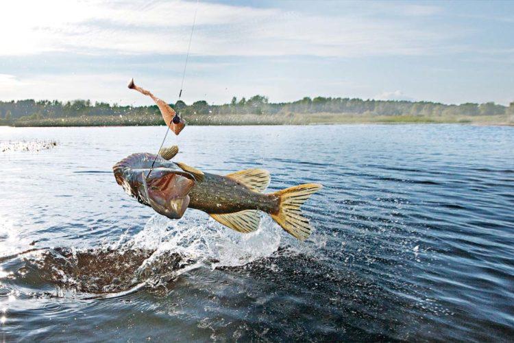 Das Angeln mit Stinger kann besonders an schwierigen Beißtagen die Fangausbeute erhöhen. Foto: BINKER