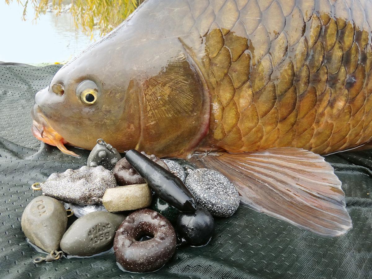 Ein Blei fürs Karpfenangeln muss schwer genug sein, um den Platz anwerfen und einen Fisch haken zu können. Foto: G. Bradler