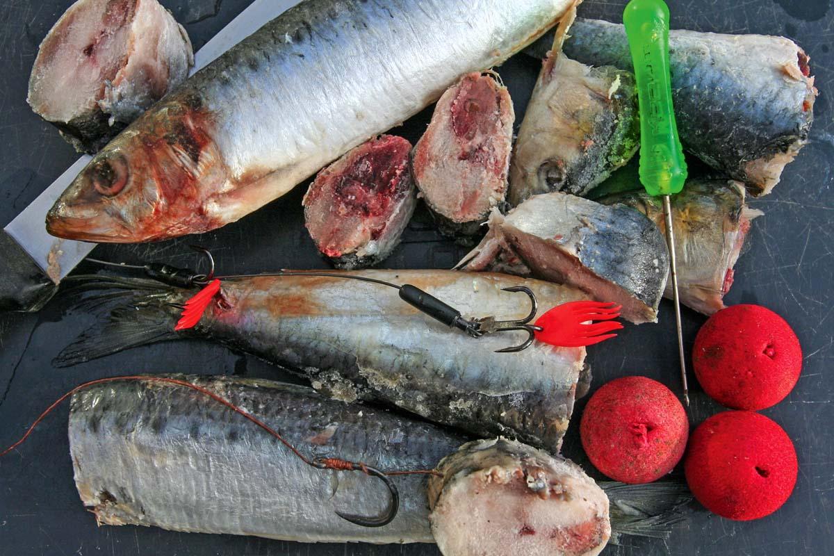 Sardinen lassen sich auf unterschiedliche Art anködern. Wegen ihres weichen Fleisches sind sie nicht für aktive Angelarten geeignet. Foto: D. Charman